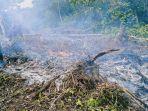 tiga-pembakar-hutan-lindung-di-ilin-medo-sikka-melarikan-diri.jpg