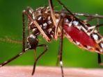 virus-zika_20170607_092644.jpg