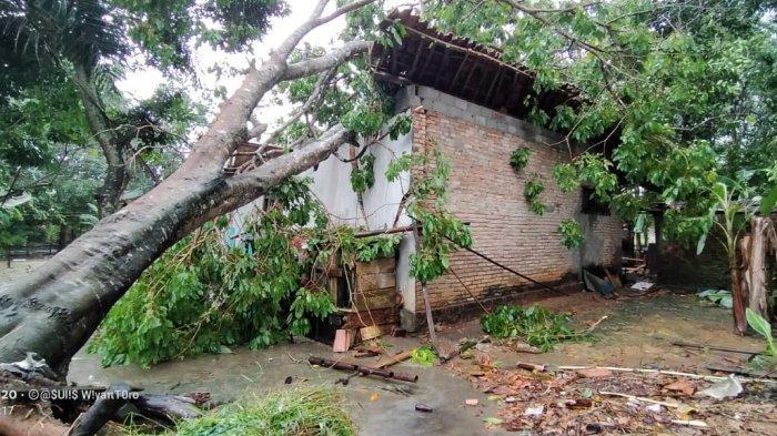1 Orang Meninggal Dunia Tertimpa Pohon Jengkol Akibat Angin Puting Beliung di Tulangbawang