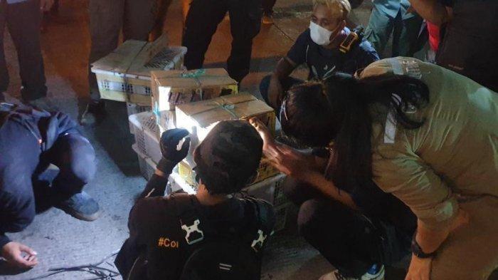 Satwa ilegal yang diamankan petugas dalam operasi terpadu di Pelabuhan Bakauheni, Lampung Selatan, Jumat (8/1/2021).