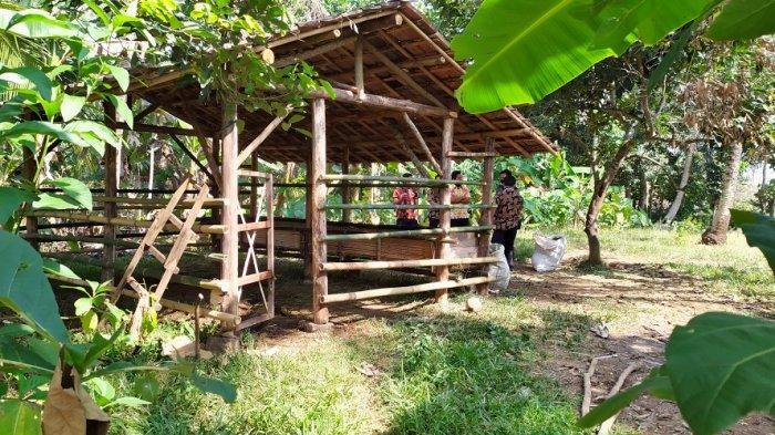 3 Ekor Sapi Limosin Raib, Warga Lampung Tengah Rugi Puluhan Juta