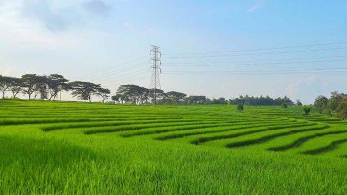 300 Hektar Persawahan di Lampung Barat Akan Dibangun Sumber Air