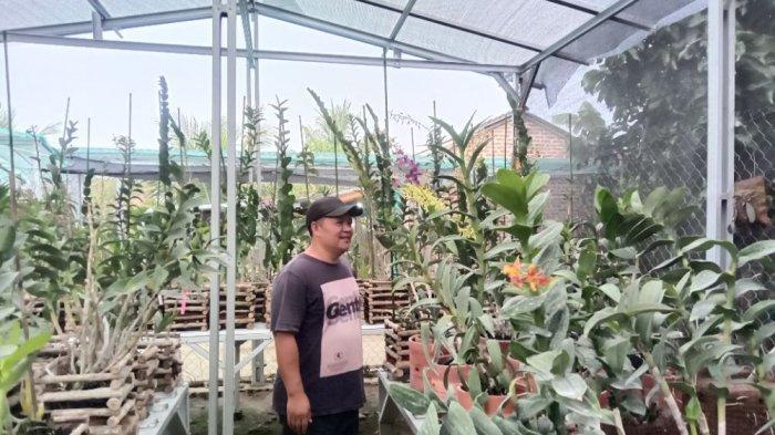 Anggrek Bulan di Hayyin Anggrek Pringsewu Lampung Dilego Rp 150 Ribu