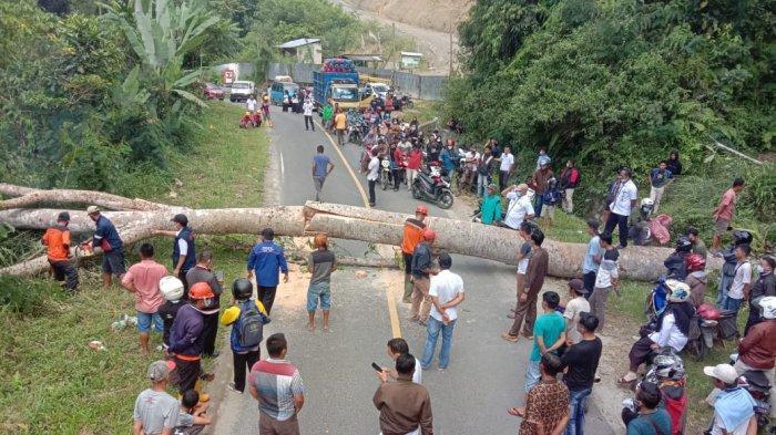 Angin Kencang Robohkan Pohon Setinggi 12 Meter, Liwa-Kenali Sempat Macet Total