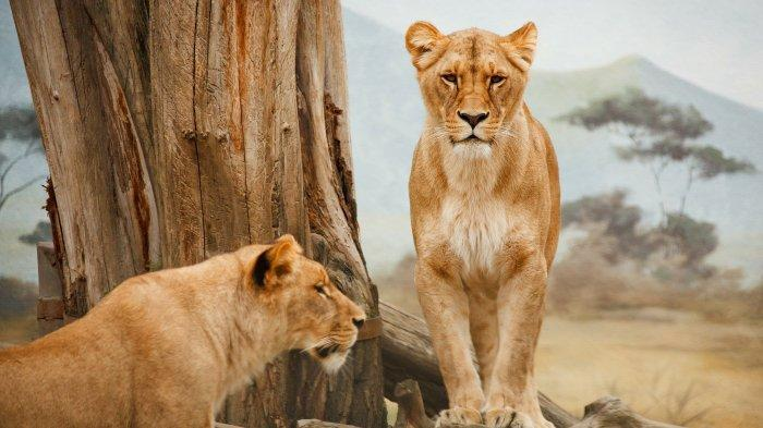 Apa Itu Fauna atau Alam Hewan