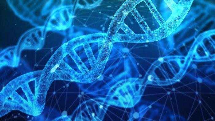 Apa Itu Kromosom dan Fungsinya
