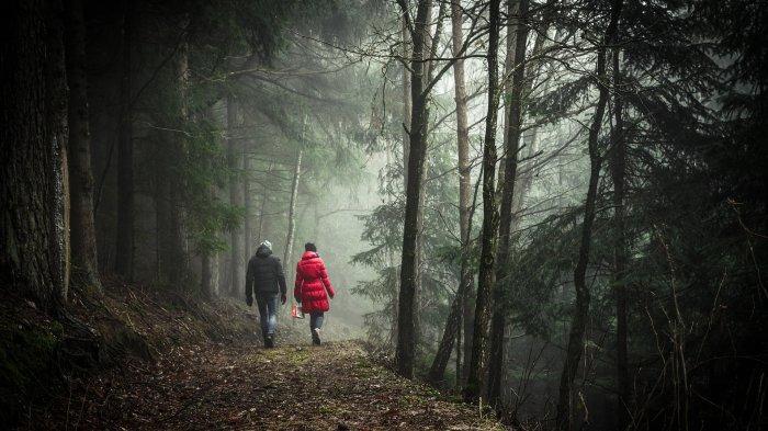 Arti Mimpi Berjalan di Hutan, Mungkin Anda Memiliki Kecemasan tentang Masa Depan