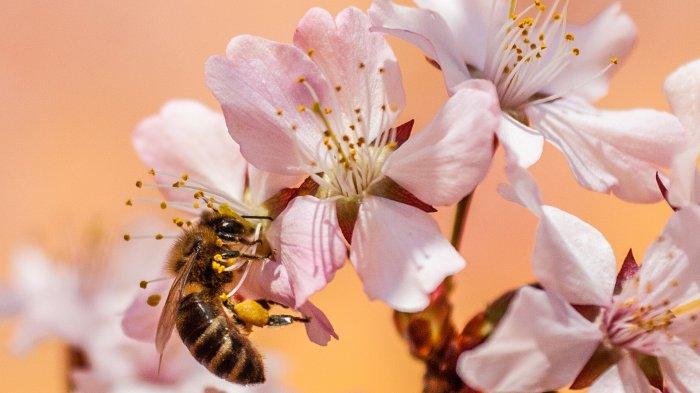 Arti Mimpi Dikejar Lebah, Ada Masalah yang Belum Tuntas