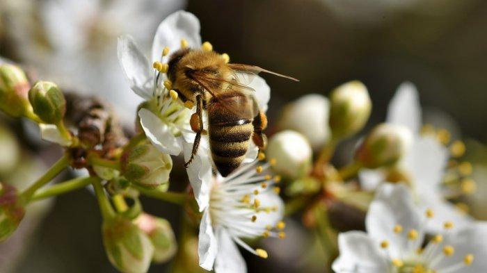 Arti Mimpi Dikejar Lebah, Pertanda Peringatan?