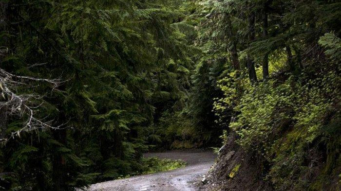 Arti Mimpi Ditiup Angin Kencang di Hutan, Cerminkan Kemandirian Anda
