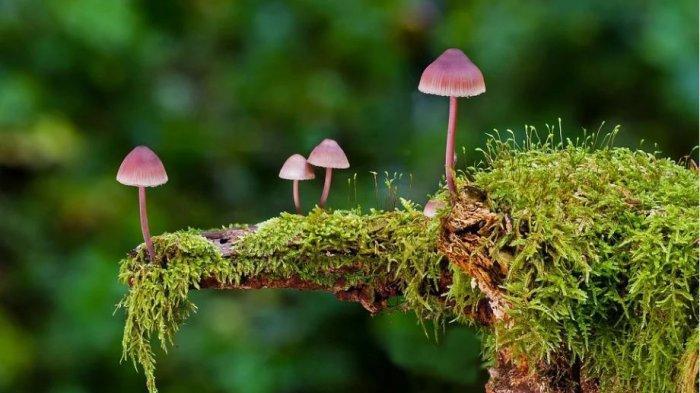 Arti Mimpi Hutan dengan Pohon-pohon Kecil