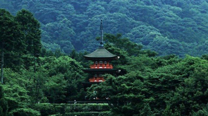Arti Mimpi Hutan di Luar Negeri, Pertanda Perlu Sabar untuk Mendapatkan Hasil yang Diharapkan