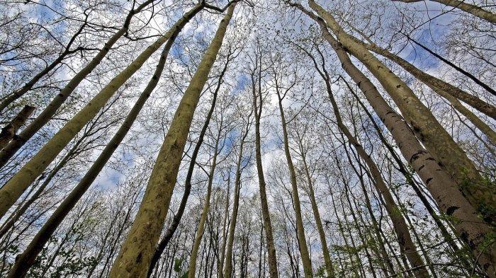 Arti Mimpi Hutan Gundul, Pertanda Punya Banyak Masalah