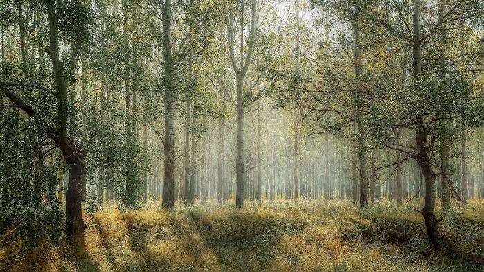 Arti Mimpi Hutan Mati, Tanda Akan Segera Kecewa