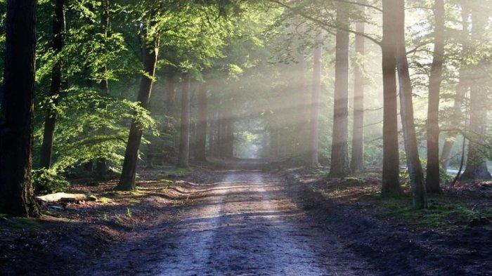Arti Mimpi Hutan, Kerap Dikaitkan dengan Simbol Kelimpahan dan Kehidupan