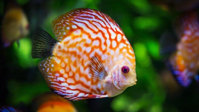 Arti Mimpi Menangkap Ikan, Pertanda Kabar Baik