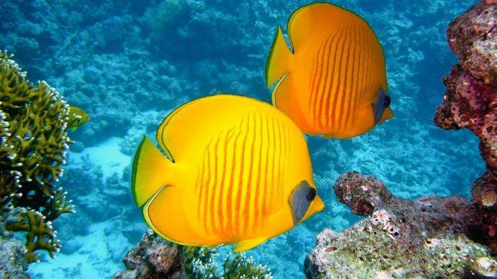 Arti Mimpi Tentang Ikan, Ternyata Simbol Keberuntungan