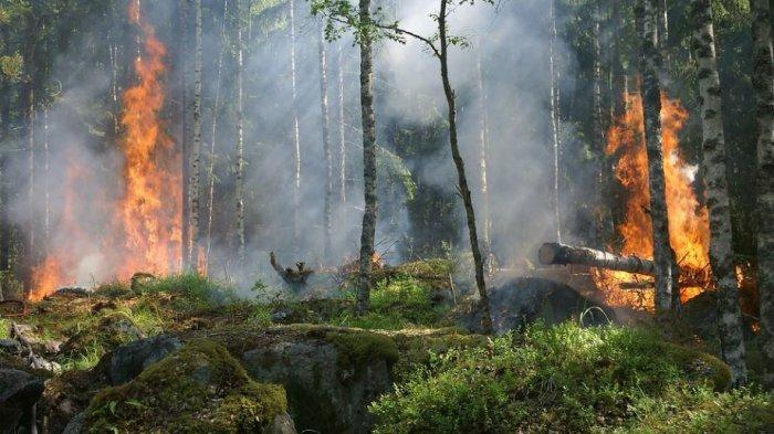 Arti Mimpi Kebakaran Hutan,  Pertanda akan Ada Perubahan dalam Diri Anda