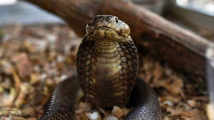 Ilustrasi ular. Simak arti mimpi digigit ular, pertanda bertemu jodoh?