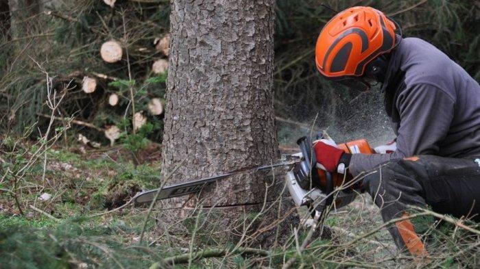 Arti Mimpi Menebang Pohon di Hutan, Pertanda Ada Peluang yang Terlewatkan