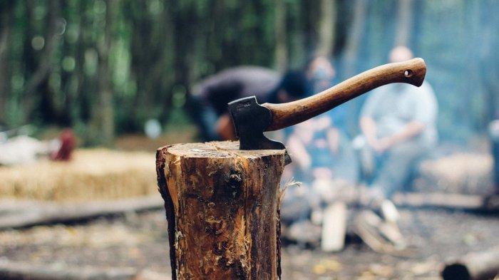 Arti Mimpi Menebang Pohon, Tanda Melewatkan Peluang Baik