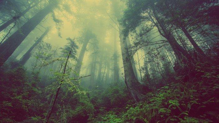 Arti Mimpi Hutan, Anda Mungkin Perlu Bersantai Sejenak untuk Melepaskan Tekanan