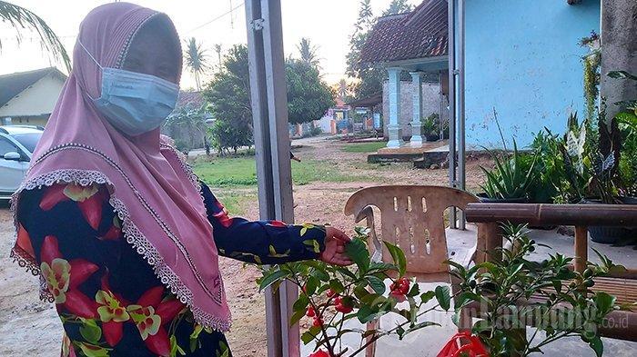 Bakul Bibit Lampung Sediakan Aneka Bibit Buah, Harga Kompetitif
