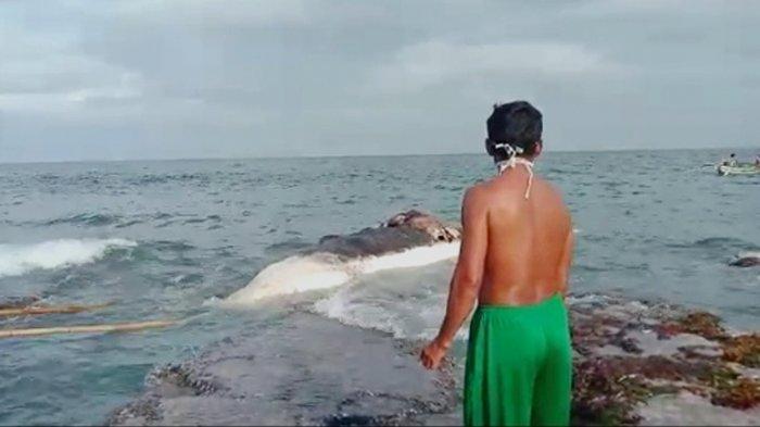 Baru Pertama Ikan Paus Ditemukan di Perairan Pulau Sebesi, Direktur Mitra Bentala Ungkap Hal Ini