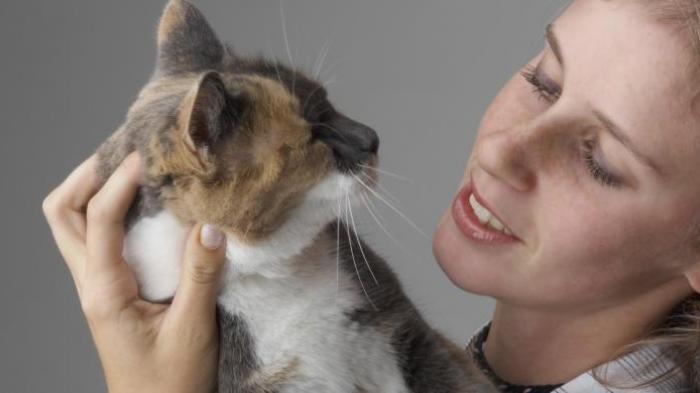 Cara Atur Jarak Kehamilan Pada Kucing Tribun Lampung