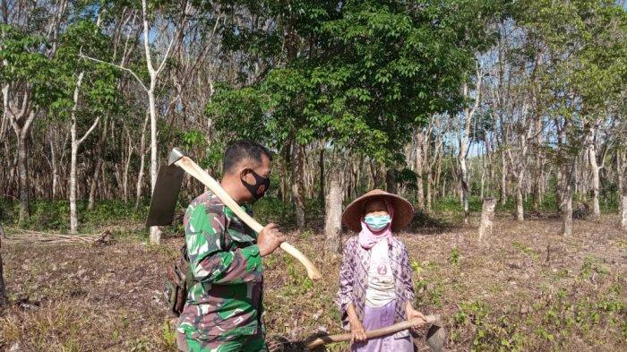 Bhabinsa di Tulangbawang Dampingi Petani Bercocok Tanam Manfaatkan Pekarangan