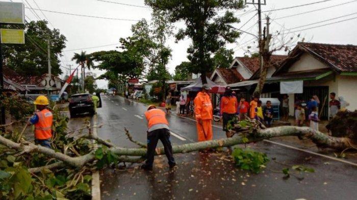 BPBD Imbau Warga Pringsewu Lampung Tebang Pohon Besar Dekat Rumah