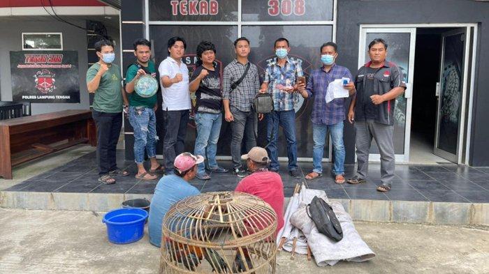 BREAKING NEWS Tekab 308 Tangkap 2 Pelaku Sabung Ayam di Lampung Tengah