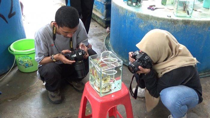 Melihat Budi Daya Kuda Laut Terbesar Indonesia di Lampung