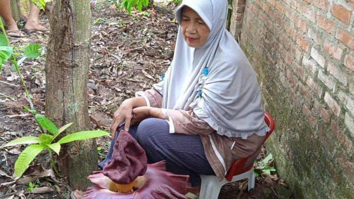 Jadi Viral, Bunga Bangkai di Metro Lampung Jadi Tontonan Warga