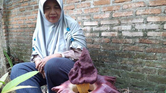 Warga Metro Lampung Dikejutkan Ada Bungai Bangkai di Halaman Rumahnya