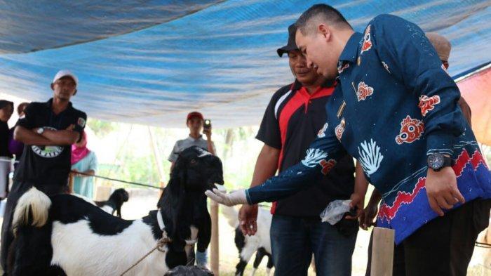 Bupati Dendi Ramadhona Targetkan Pesawaran Jadi Lumbung Ternak Unggul di Lampung