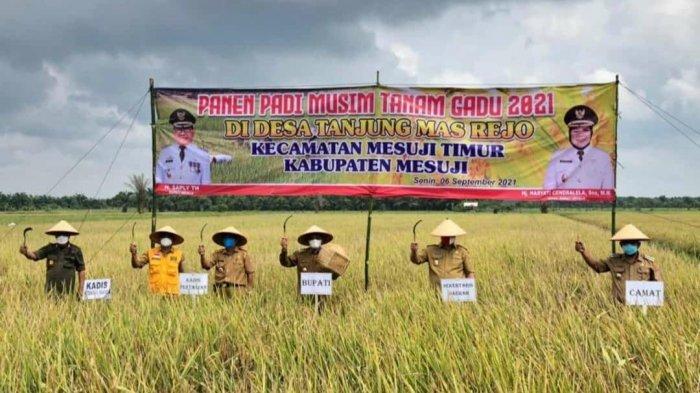 Bupati Mesuji Lampung Hadiri Panen Raya Padi di Desa Tanjung Mas Rejo