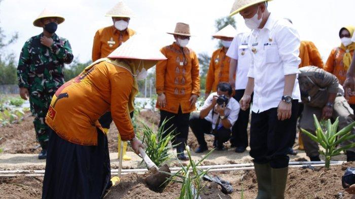 Tanam Obat dan Sayuran, Kebun Agropark di Lampung Tengah Jadi Solusi Hadapi Covid