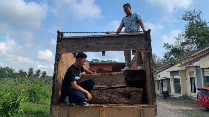 Buruh Asal Pringsewu Diamankan Polisi Bawa Muatan Kayu Ilegal