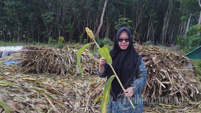 Cerita Ketua DPRD Mesuji Elfianah dari Hobi Bertani hingga Siap Jadi Pelopor Pertanian