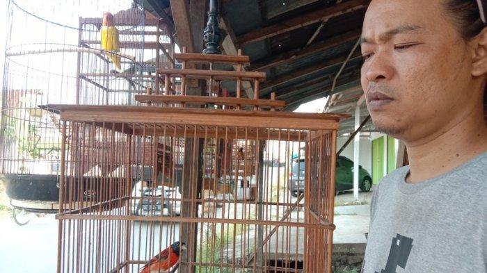 Cuncun Peternak Burung di Pringsewu Jual Red Siskin Dewasa Jantan Rp 1,5 Juta per Ekor