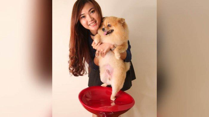 Owner Coco EyelashDeasy Febrianti PeliharaAnjing Mini Pom: Kecil, Lincah dan Lucu