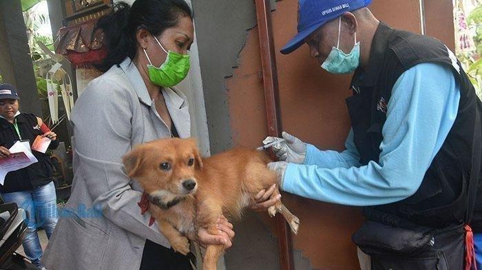 Disbunnak Tanggamus Lampung Terima Stok Vaksin Rabies 250 Dosis