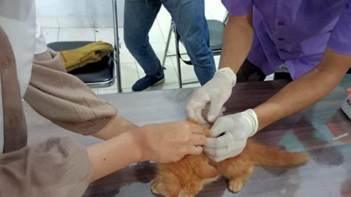 DKP3 Pastikan Kota Metro Lampung Aman dari Penyakit Rabies