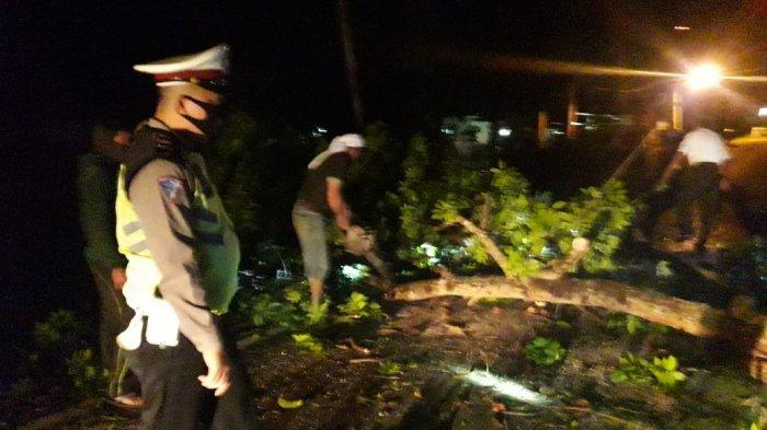 DLH Pringsewu Data Pohon Besar di Sepanjang Jalinbar