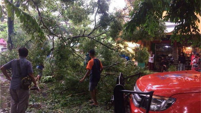 Evakuasi Pohon Tumbang, BPBD Kota Metro Terjunkan 10 Personel