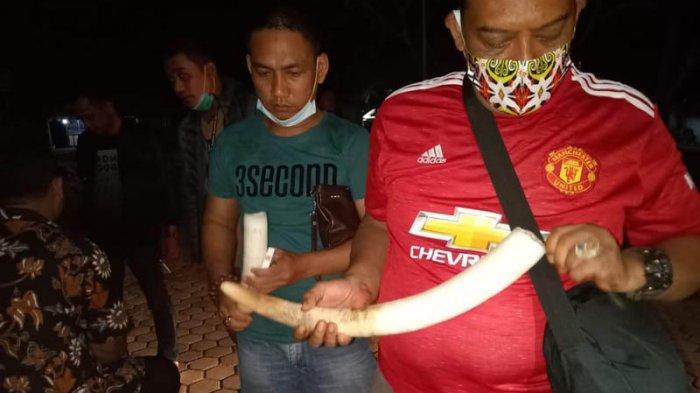 BREAKING NEWS TNBBS-Polda Lampung Gagalkan Transaksi Jual Beli Gading Gajah, Amankan 3 Tersangka