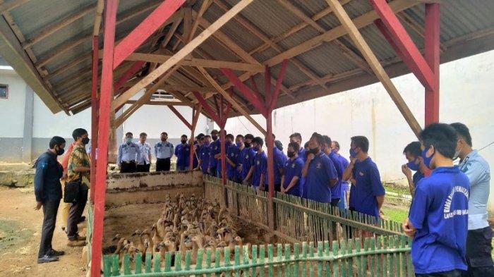 Genjot Target PNBP, 25 WBP Lapas Way Kanan Diberikan Pelatihan Budidaya Itik Petelur