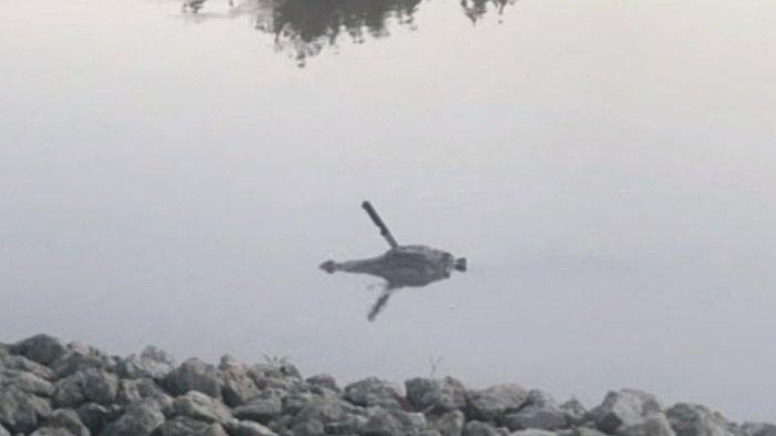 Warga di Kota Kecil Texas Ini Geger Lihat Buaya Berenang dengan Pisau Tertancap ke Kepalanya