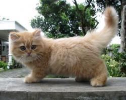 Penyebab Bulu Kucing Rontok Lalu Mencret Tribun Lampung